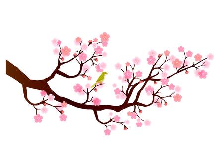 Icono de la flor del ciruelo Foto de archivo - 47164531