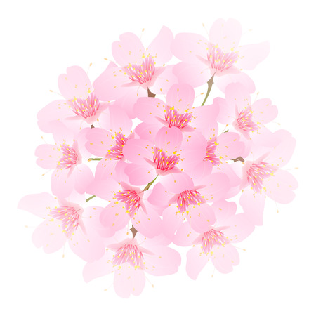 Spring cherry blossom icon