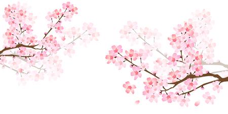 Frühling Kirsche-Blüte Hintergrund Standard-Bild - 49511554