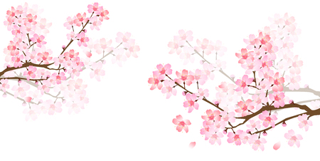 Spring cherry blossom background Vettoriali