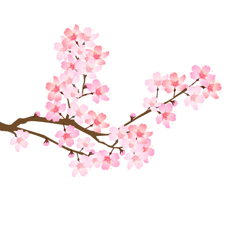 Spring cherry blossom icon