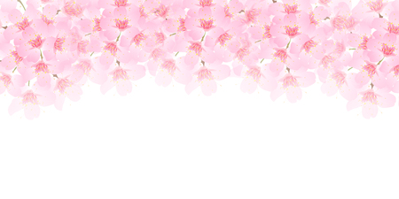 Spring cherry blossom background  イラスト・ベクター素材