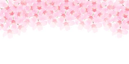 봄 벚꽃 배경 일러스트