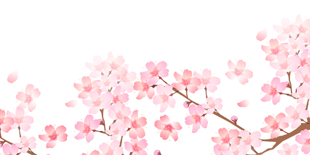 Spring cherry blossom background Ilustrace