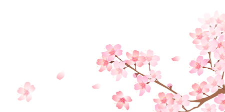 Spring cherry blossom background Ilustracja