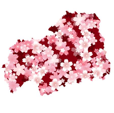 hiroshima: Hiroshima spring cherry blossoms Illustration