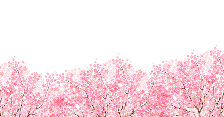 Cherry spring flower background Vettoriali