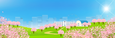 cherry blossoms: Cherry Spring school background