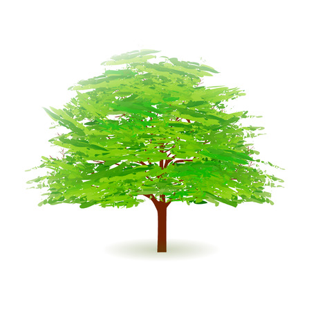 early summer: Tree leaves fresh green icon