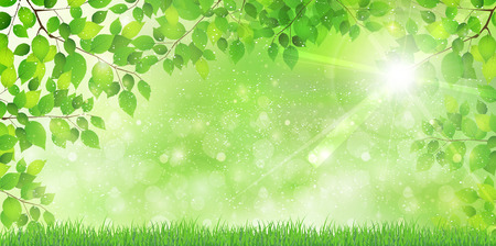 early summer: Fresh green leaf tree background