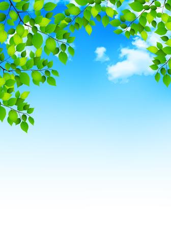fresh leaf: Fresh green leaf tree background