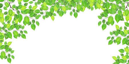green background: Fresh green leaf tree background