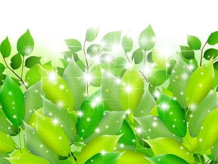 green eco: Leaf tree fresh green background
