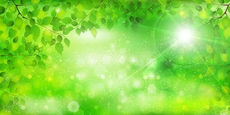 green background: Leaf tree fresh green background