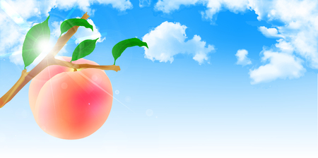 orchards: Peach fruit sky background