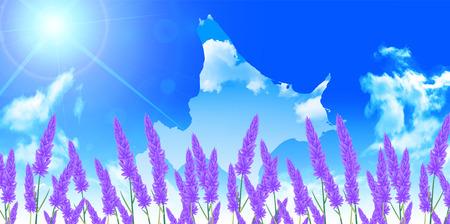 hokkaido: Lavender Hokkaido landscape background Illustration
