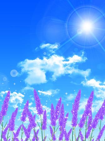 hokkaido: Lavender flower landscape background