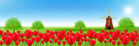 tulips in green grass: Tulip flower landscape background