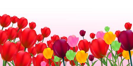 tulip flower: Tulip flower landscape background