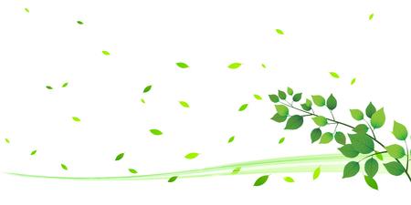 early summer: Leaf tree fresh green background