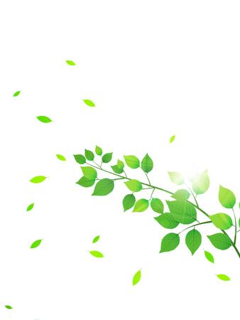 Leaf tree fresh green background
