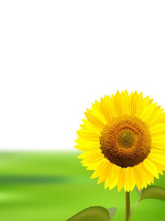 early summer: Sunflower summer landscape background Illustration