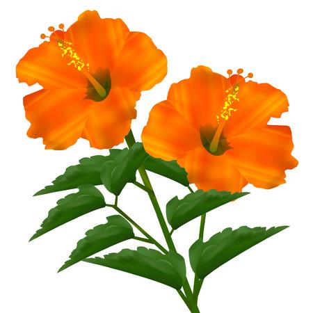 Hibiscus summer flower icon Vektorové ilustrace