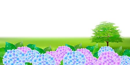 rainy season: Hydrangea rainy season landscape background Illustration