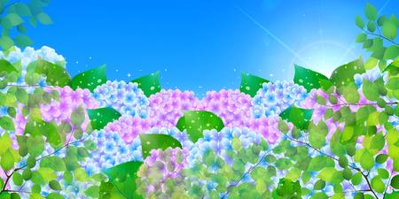 the rainy season: Hydrangea rainy season landscape background Illustration