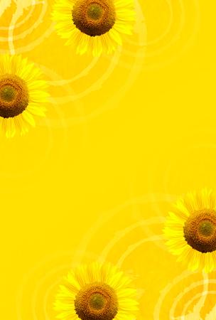 sympathy: Sunflower summer summer greeting background