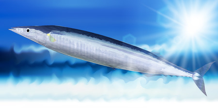 pacific: Pacific saury fish sea background Illustration