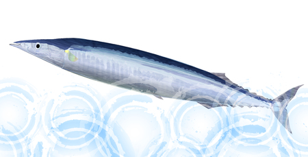 saury: Pacific saury fish sea background Illustration