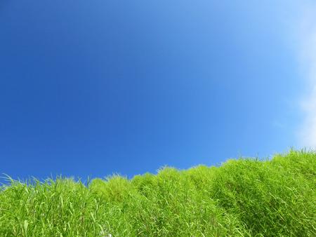 Kokia ほうき草風景背景 写真素材