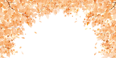 autumn leaves background: Autumn leaves autumn landscape background