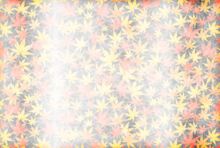 silver maple: Silver colored leaves autumn background