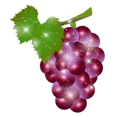 grape fruit: Grape fruit autumn icon