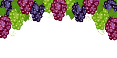 grape fruit: Grape fruit autumn background