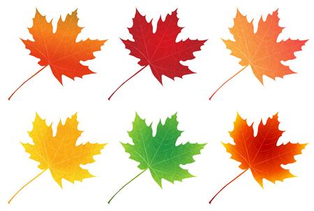 Herbstblätter im Herbst Ahorn-Symbol
