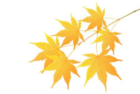 fall leaves: Autumn leaves fall icon leaves Illustration