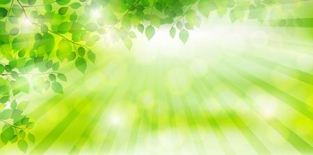 신선한 녹색 나무 잎 배경 일러스트