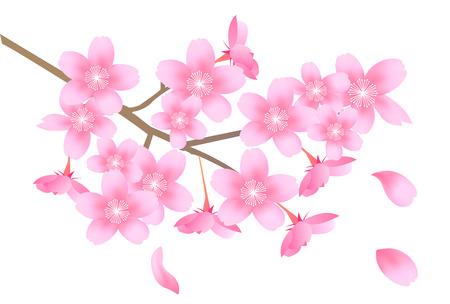 Cerise fleur de printemps icône Vecteurs