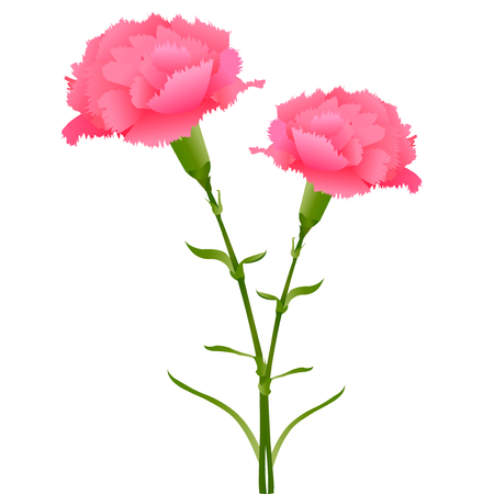 Mother's Day Carnation Spring Icon