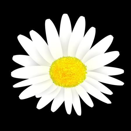 花マーガレットばねアイコン