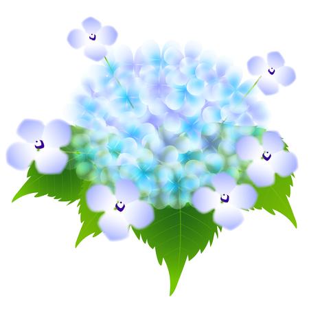 Hydrangea rainy season flower icon