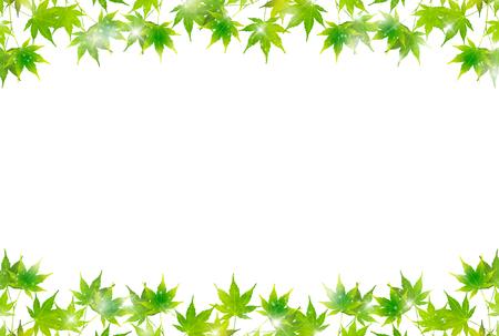 Maple leaves summer background