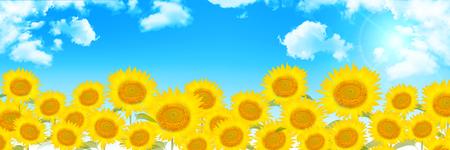 ひまわり夏の花背景