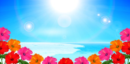 Hibiscus Sea Summer Background