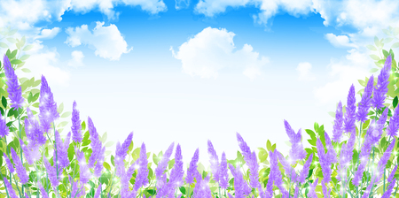Lavender herb scenery background
