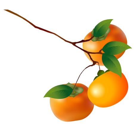 Persimmon fruit autumn icon Illustration
