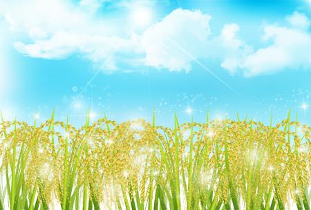 Rice autumn landscape background Vectores